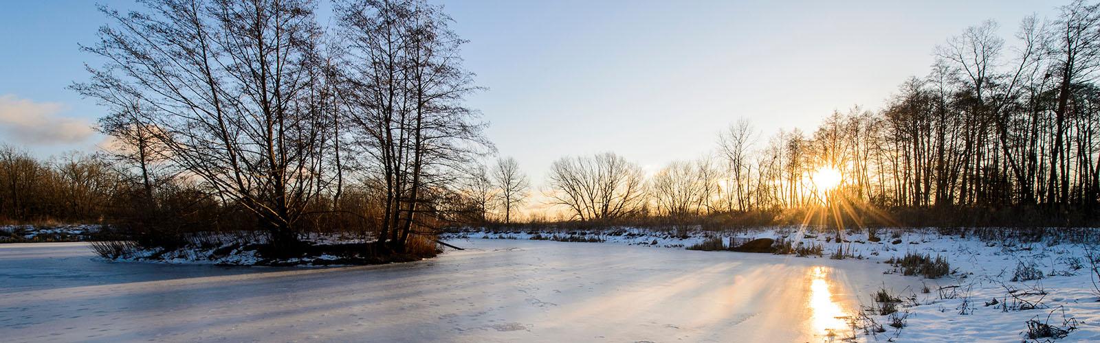 Winter Sunshine in the University of Wisconsin-Madison Arboretum